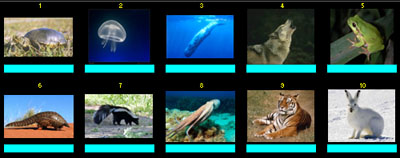 100 Animales por Pescailla