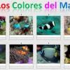 Colores del mar por Princesa
