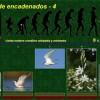 especies-encadenadas-4