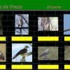 Aves de presa 2 por Pinky