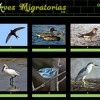 Aves migratorias por Pinky