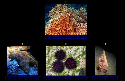 Zoológico marino por Oti