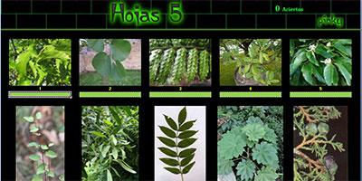 hojas5