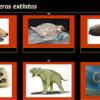 Mamíferos extintos por Oti