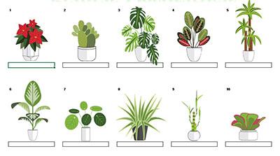Plantas decorativas por Princesa